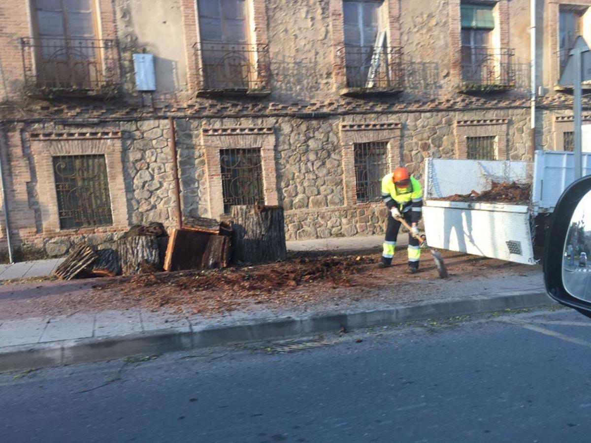 El PP está alarmado por la poda de árboles centenarios en la Avenida de Carlos III