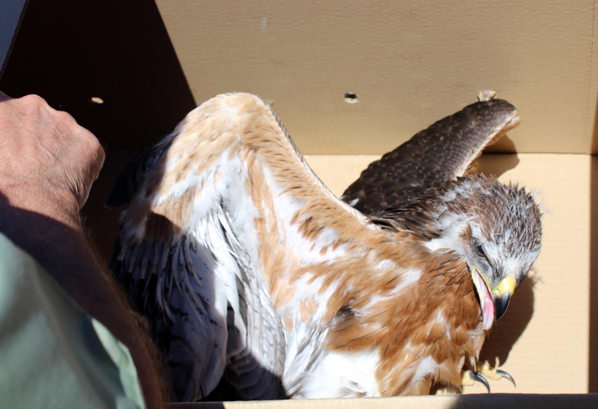 Casi la mitad de las llamadas para recoger animales protegidos provienen de la provincia de Toledo