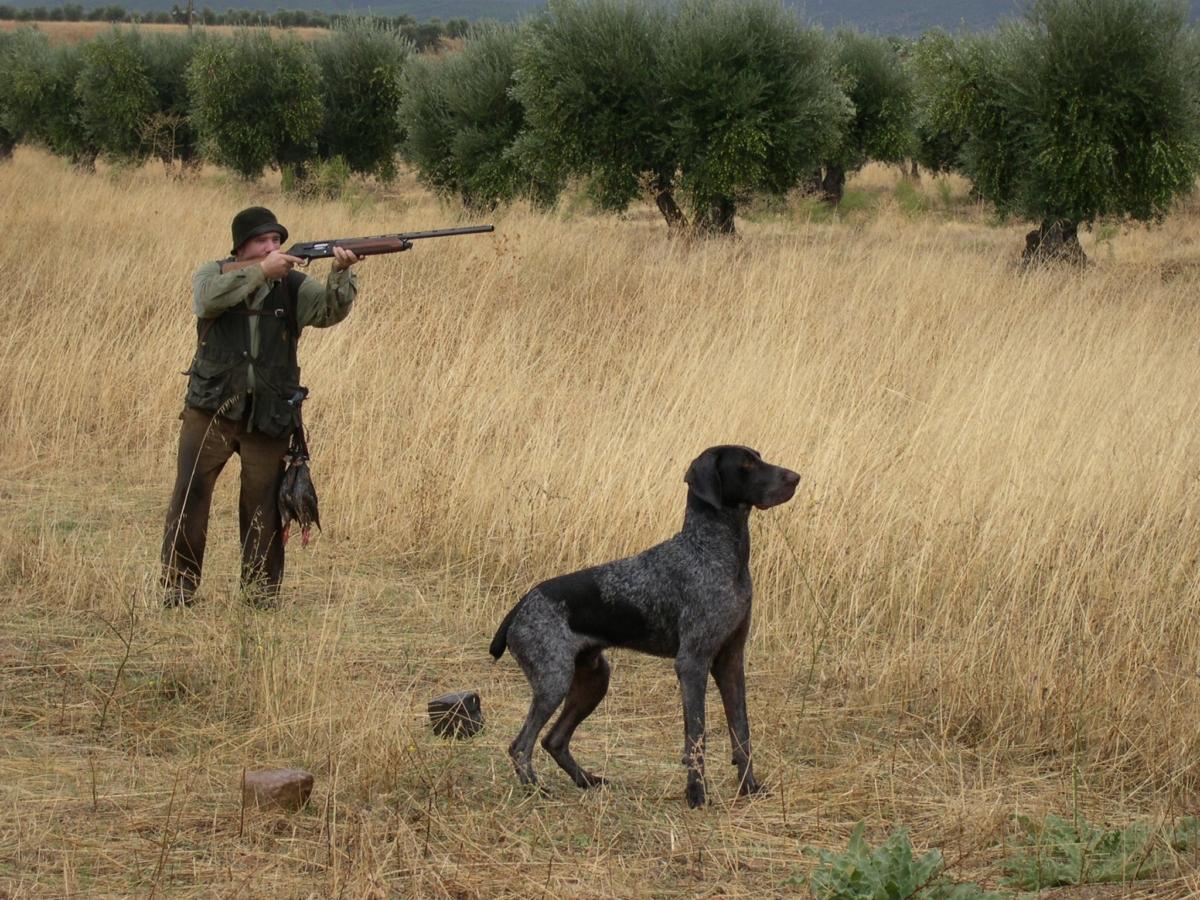 caza Imagen de archivo de un cazador junto a su perro.