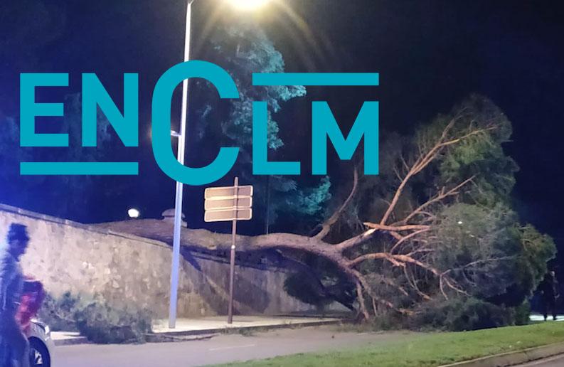 Imagen del árbol nada más caerse en el Paseo de la Vega, en Toledo.
