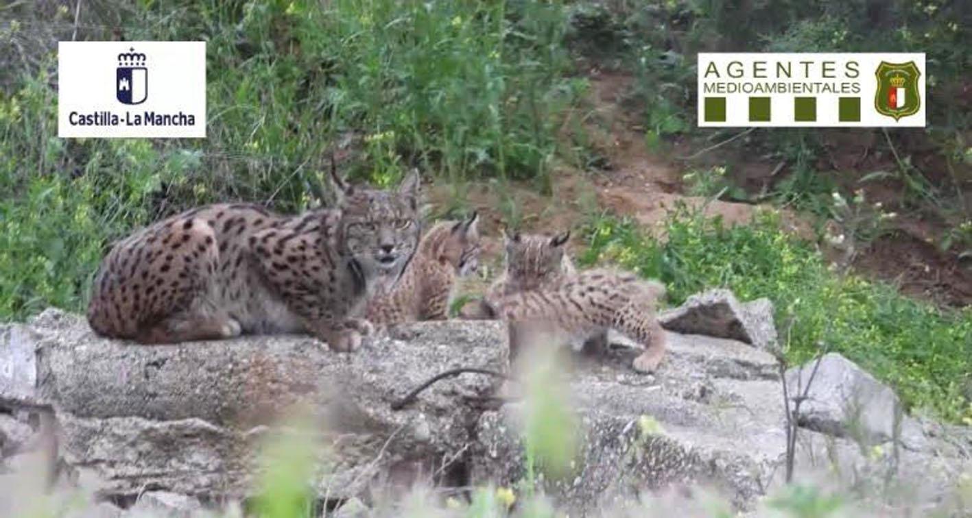 La imagen, sacada del video de los Agentes Medioambientales, es realmente preciosa por su contenido.