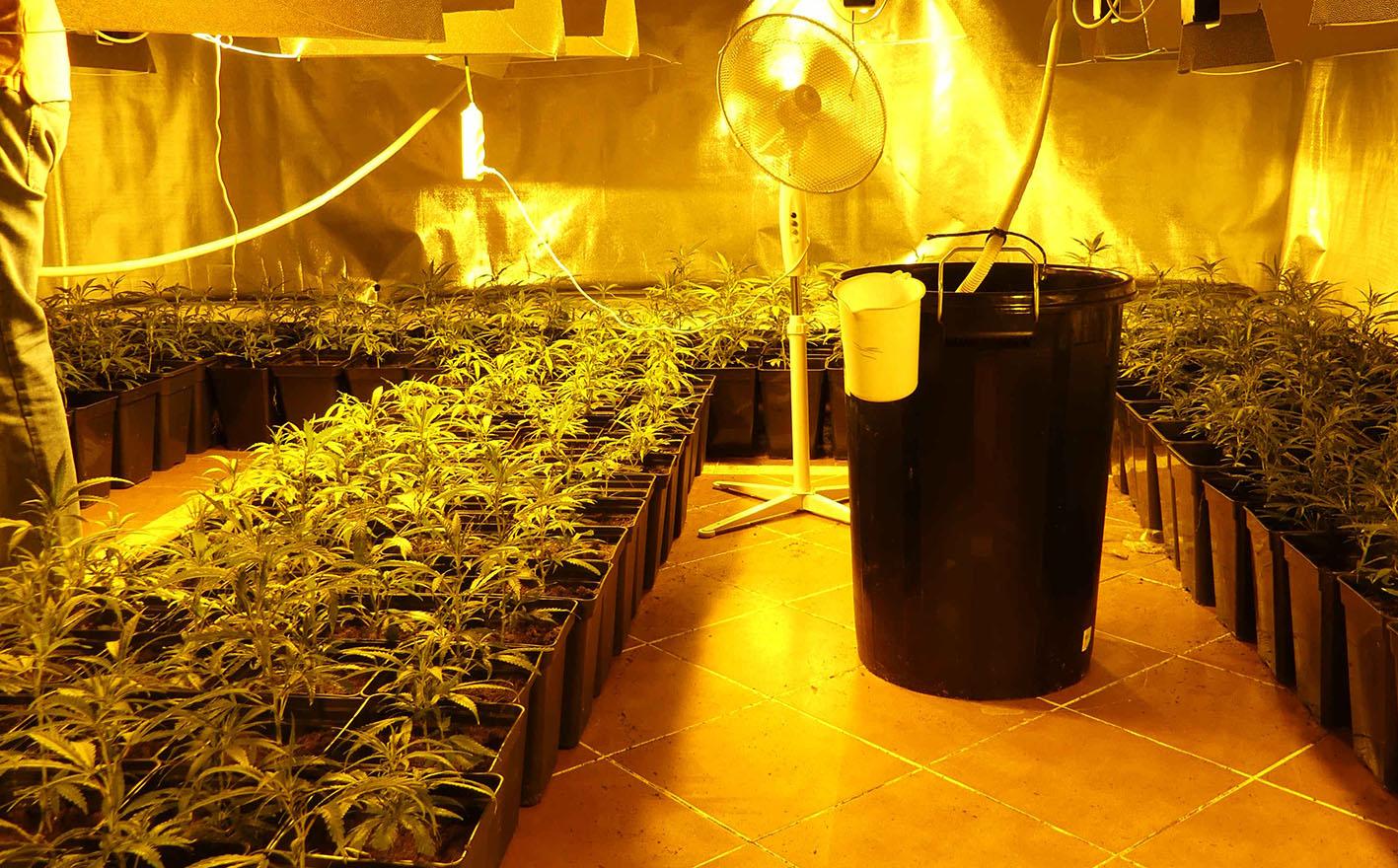 Interior de la plantación de marihuana en Olías del Rey.