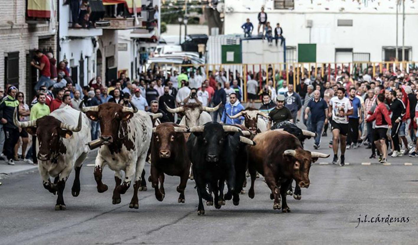 Este año no podrá ser. Los encierros de Villaseca de la Sagra se han suspendido.