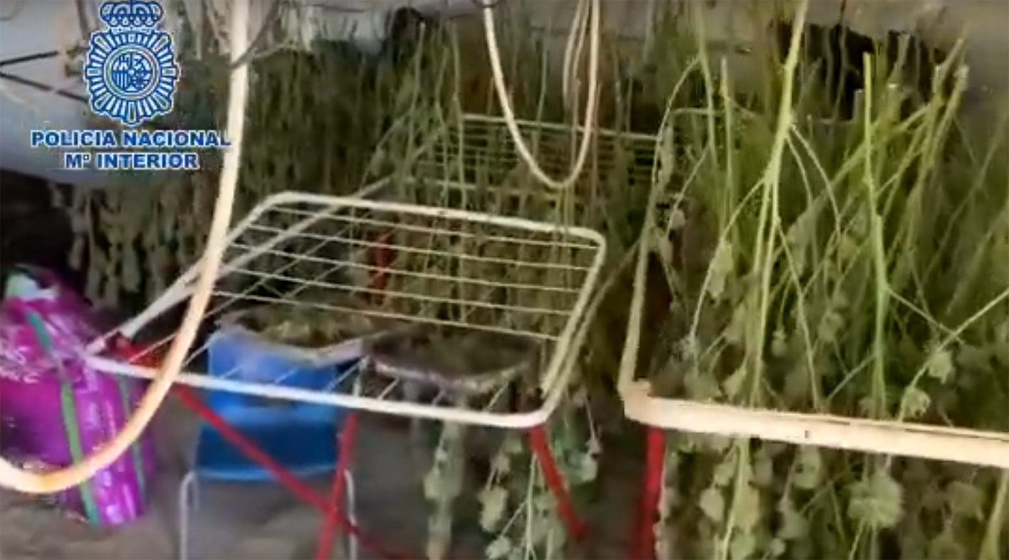 La marihuana se cultivaba en el interior de una vivienda de Méntrida.