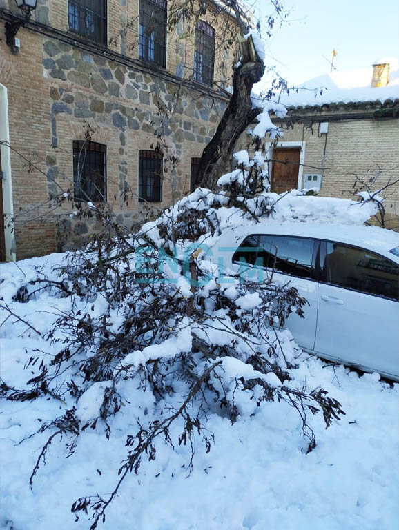 Uno de los árboles caídos en Toledo.