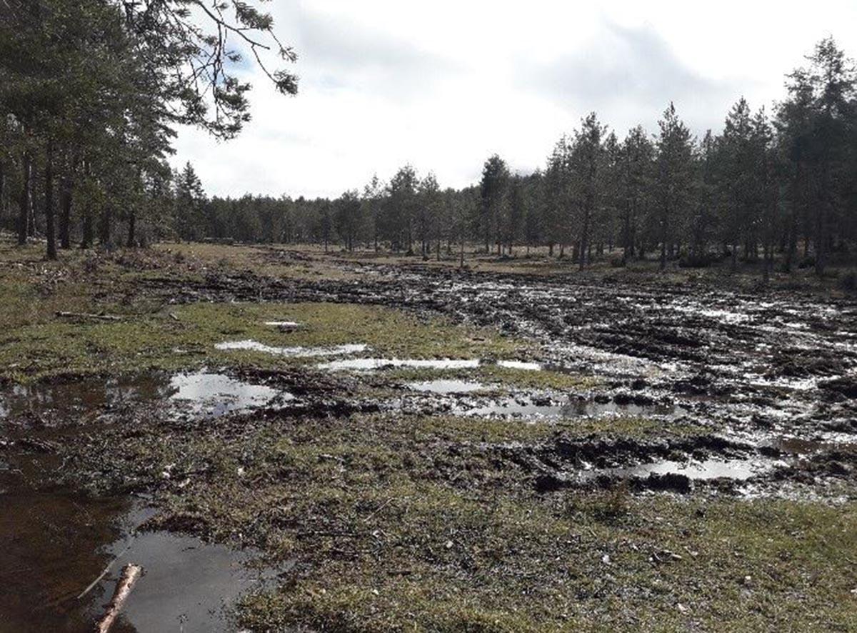 La Cañada del Mostajo, después del paso de la maquinaria pesada, según la Sociedad Entomológica y Ambiental de CLM
