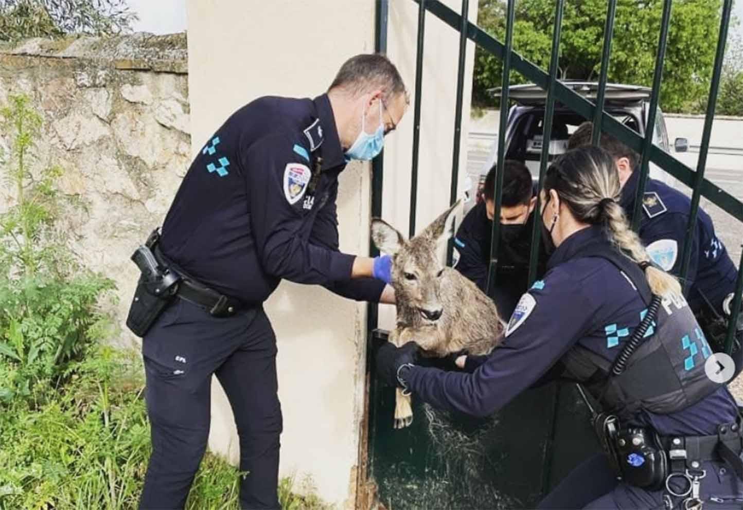 Los agentes de la Policía Local liberaron a un corzo atrapado.