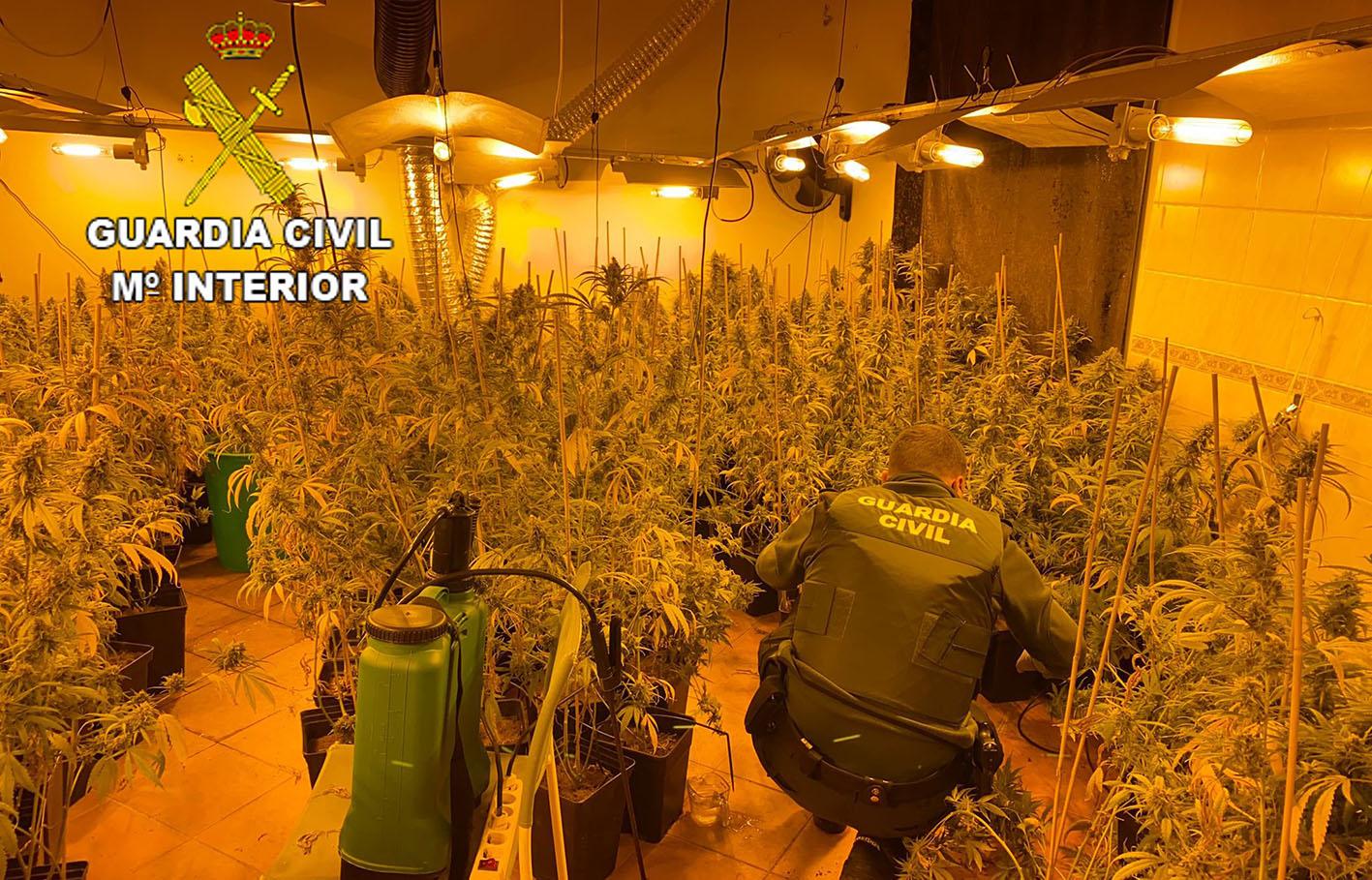 En las dos viviendas registradas había plantaciones ilegales de marihuana.