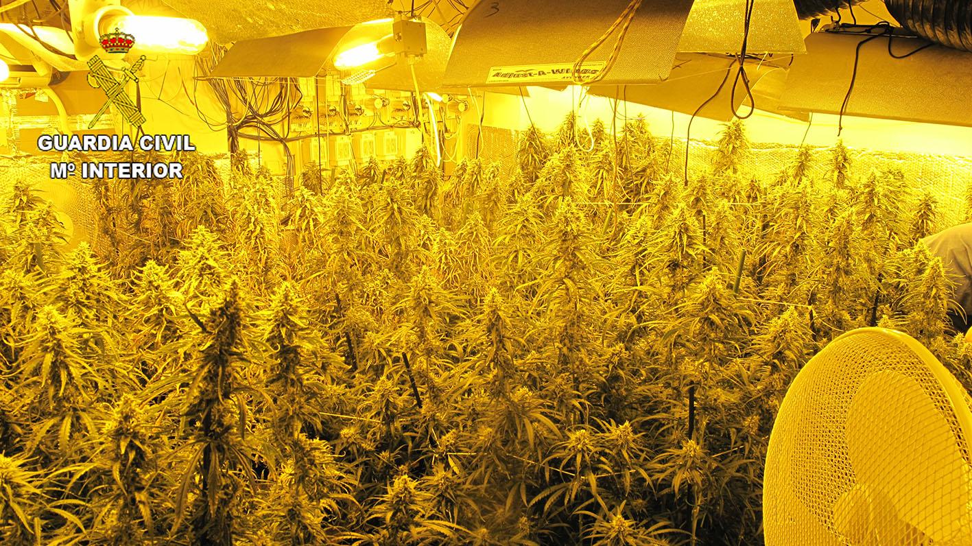 La marihuana, un negocio en alza desde hace ya varios años y que provoca que se desmantelen numerosas plantaciones.