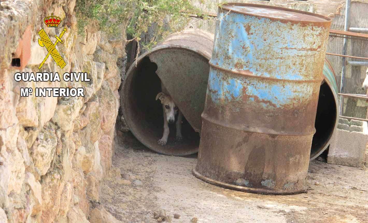Perros en malas condiciones en Moratilla de Henares.