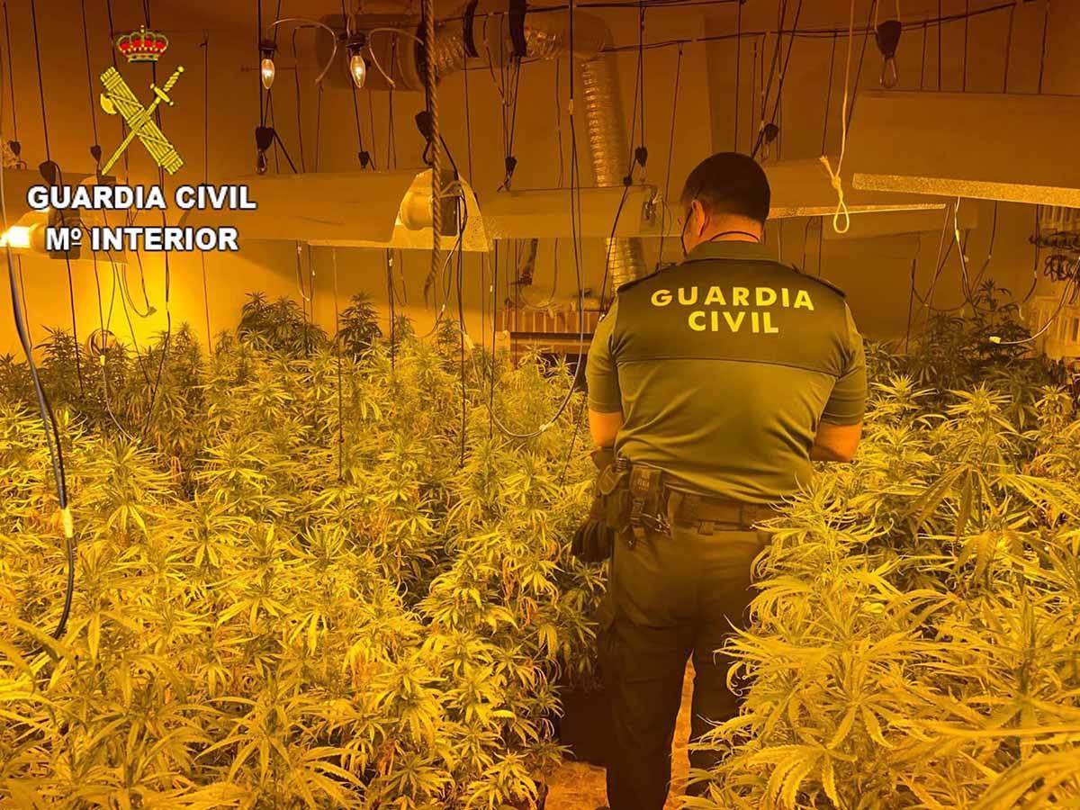 Plantación ilegal de marihuana en San Martín de Pusa