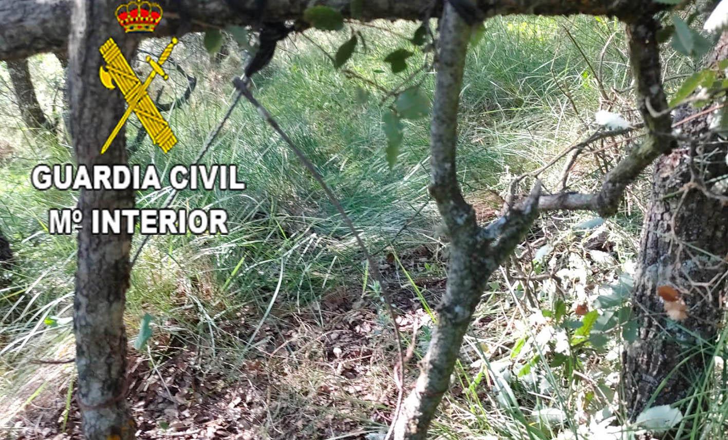 En la imagen, el cable de acero que había colocado el hombre denunciado. Su intención era cazar… pero fue cazado él por el Seprona de la Guardia Civil.