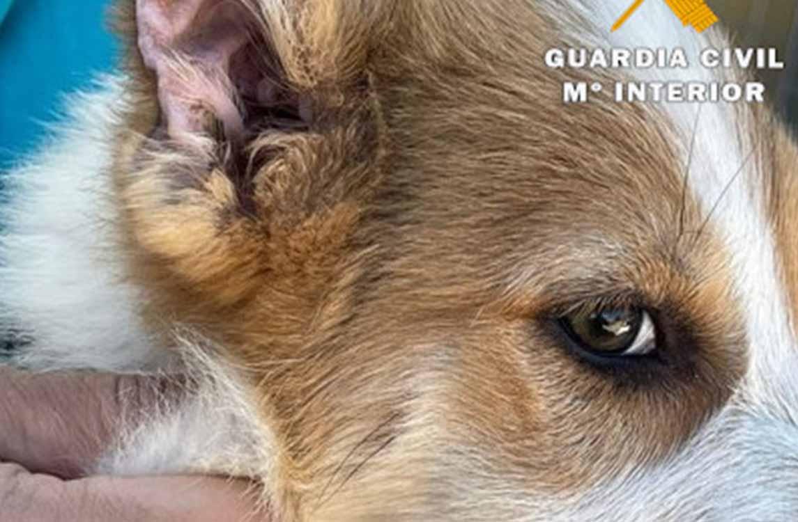 Tres cachorros maltratados en Caudete (Albacete)