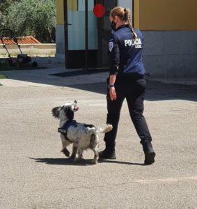 Imagen de archivo del perro detector de estupefacientes de la Policía Local de Toledo junto a su guía.